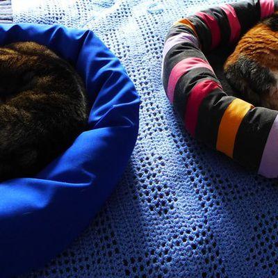Bleu pour les garçons et rose pour les filles, même pour les chats...