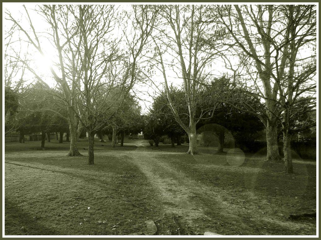 Un coin paisible,le jardin public.