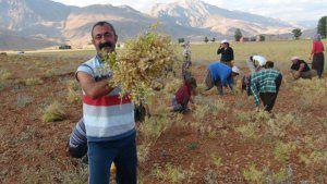 Pour la première fois de l'histoire de la Turquie, un communiste, membre du TKP, remporte la municipalité d'une capitale de province, Dersim (82000 habitants).