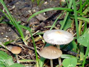 J'ai ramassé des champignons...