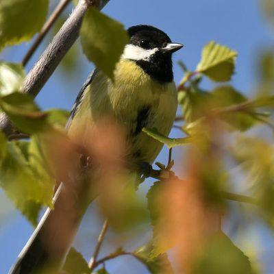 Quelques oiseaux aux Mayens de Conthey (VS)