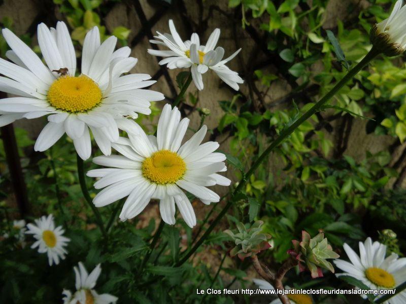 Le jardin Le Clos fleuri en juin ......2019