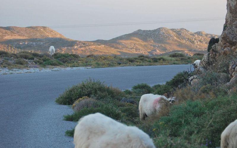 Voyage en famille en Crete - Aout 2015 - Paleochora