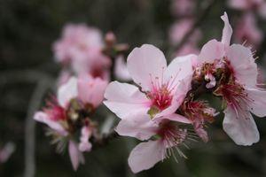 fleurs et douceur de vivre