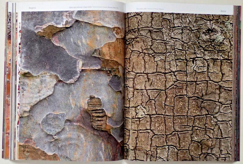 a découvrir à Sainte Maxime : ECORCES, une galerie d'art proposée par Cédric Pollet