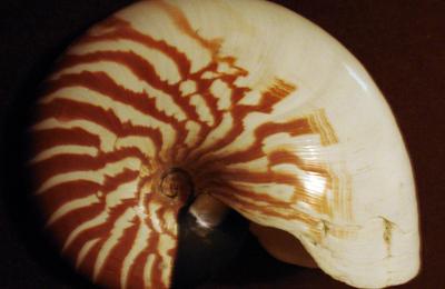 Mers et océans : les différents coquillages marins (Youtube)