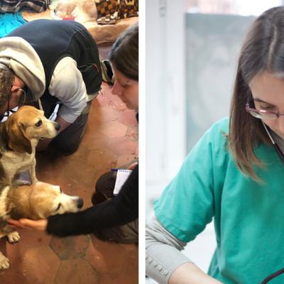 Les nos vétérinaires s'engagent pour les animaux de la ferme-refuge d'AVA