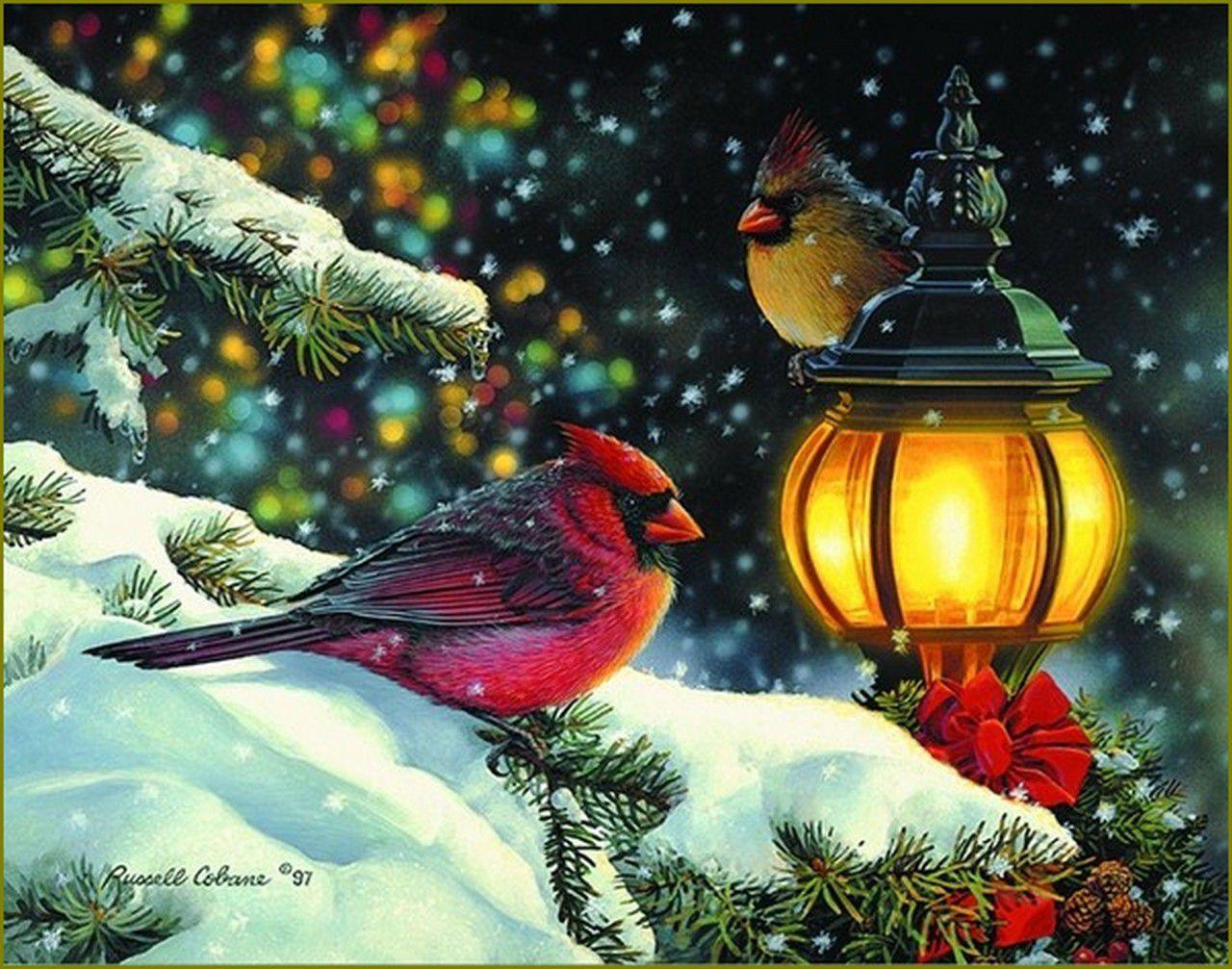 Oiseaux en peinture - Russel Cobane