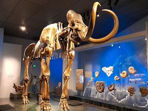 Le musée des Confluences : l'Homme, des origines à l'au-delà