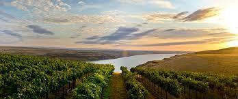 Viticulture dans L'Etat de Washington