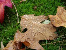 Météo = gouttes et feuilles
