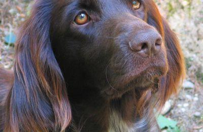 """Clap de fin dans """"Ma vie de chiens""""."""