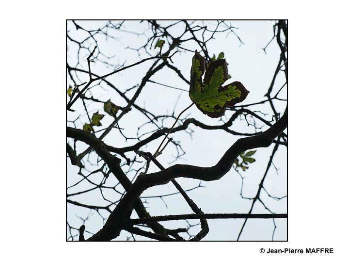 Les arbres dépouillés de la plupart de leurs feuilles dessinent sur un ciel nacré un graphisme saisissant et éphémère.