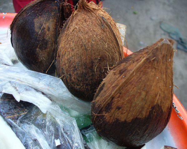 Noix de cocotier (Photos J. Roger)