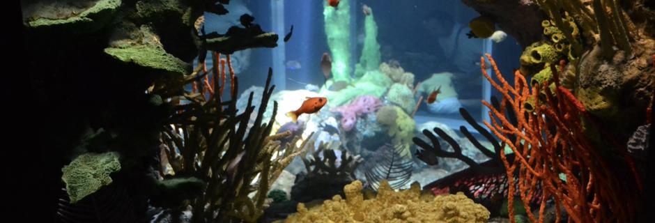 Lisbonne et son aquarium