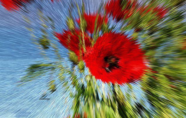 Abstrait ,éclatement Coquelicot_21