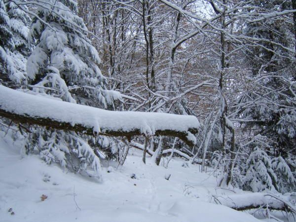 Dans les Vosges en Novembre 2005