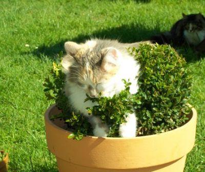 Ma nouvelle décoration de jardin