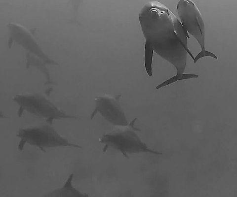 Communication avec les dauphins