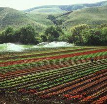 Plus de la moitié des pesticides utilisés par les agriculteurs californiens sont des matières actives approuvées pour l'agriculture biologique