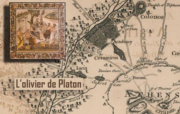 HERVELINE VINCHON - L'OLIVIER DE PLATON, SON HISTOIRE (2020)