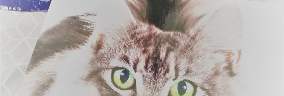Campagne purina one de theinsiders france