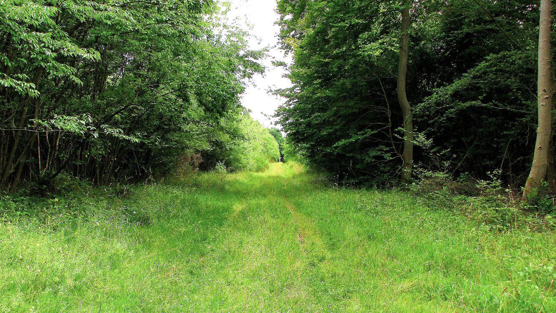 carrefour_Route d'Humières_Route de la Forte Haie