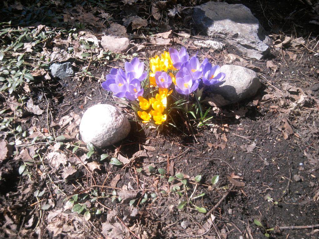Le détonant printemps