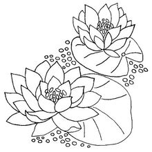 Water Lily Embroider