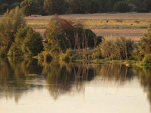 La loutre de la rivière Esla