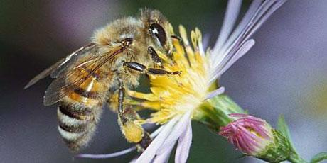 Sauvons les abeilles.....