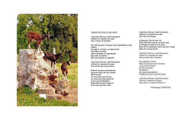 Trois chèvres (Véronique CHOUEN)