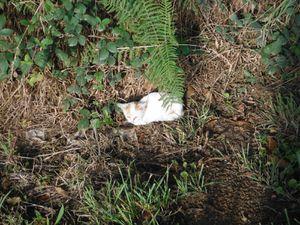 Une espèce de trèfle ; un jeune chat probablement abandonné et vêtement en perdition.