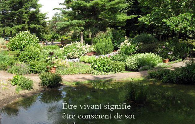 Michel Onfray, les plantes et le végétarisme