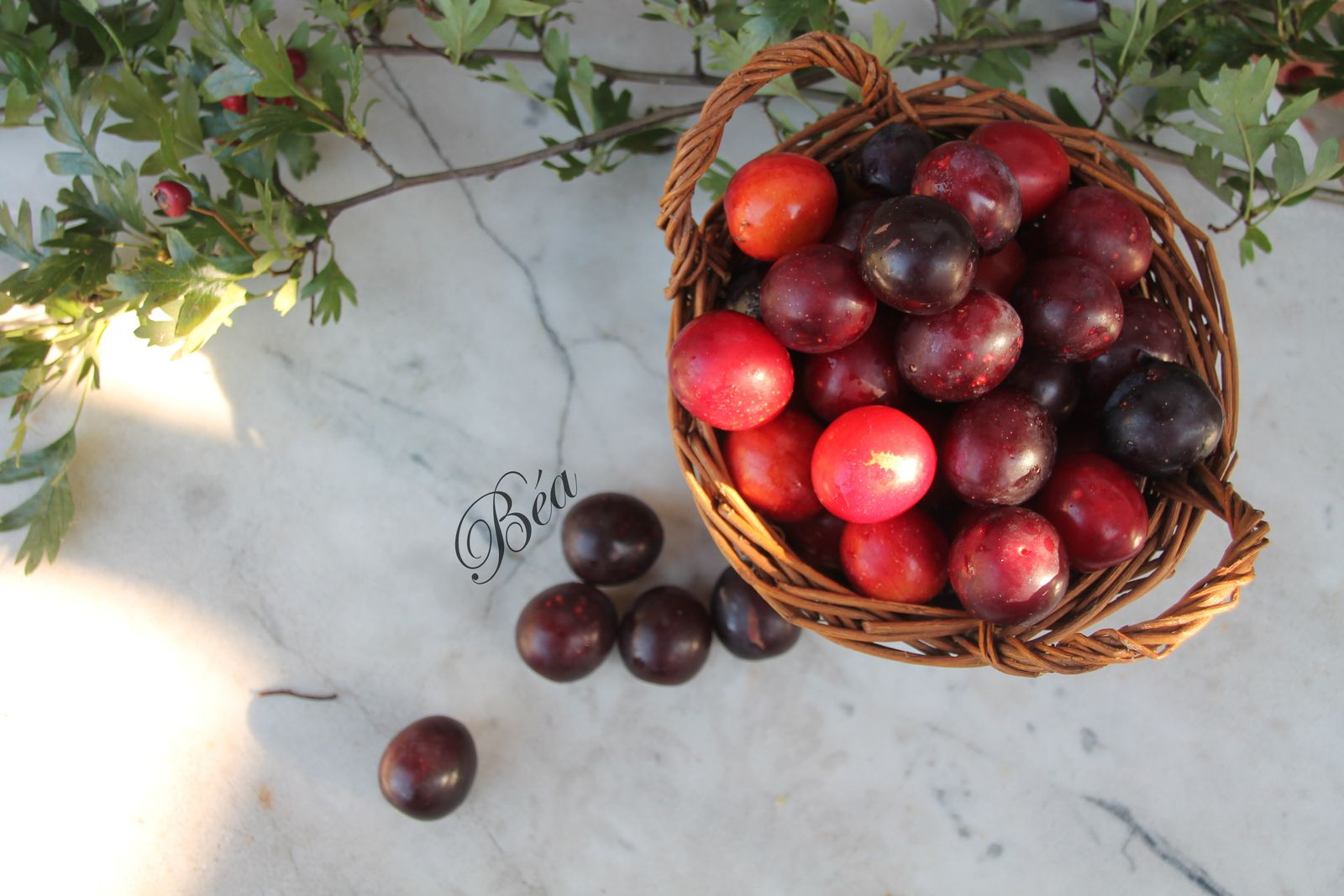 Clafoutis aux mini prunes sauvages