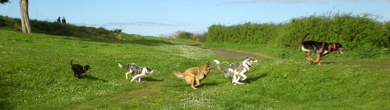 C'est la rentrée pour les randonnées canines !