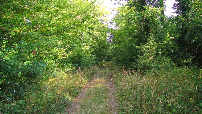 le GR124A dans la Forêt de Compiègne