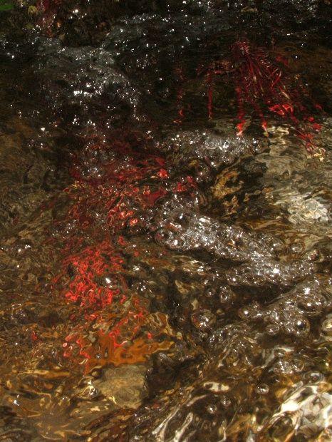C'est la rivière la plus proche de mon village . C'est au fil de l'eau que les dessins et les couleurs racontent leurs histoires avec l'Agly mystérieuse .