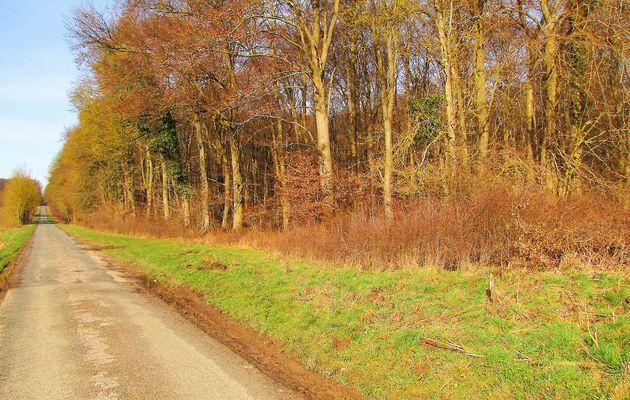 carrefour_Route du Pendu_Laie de Fleury