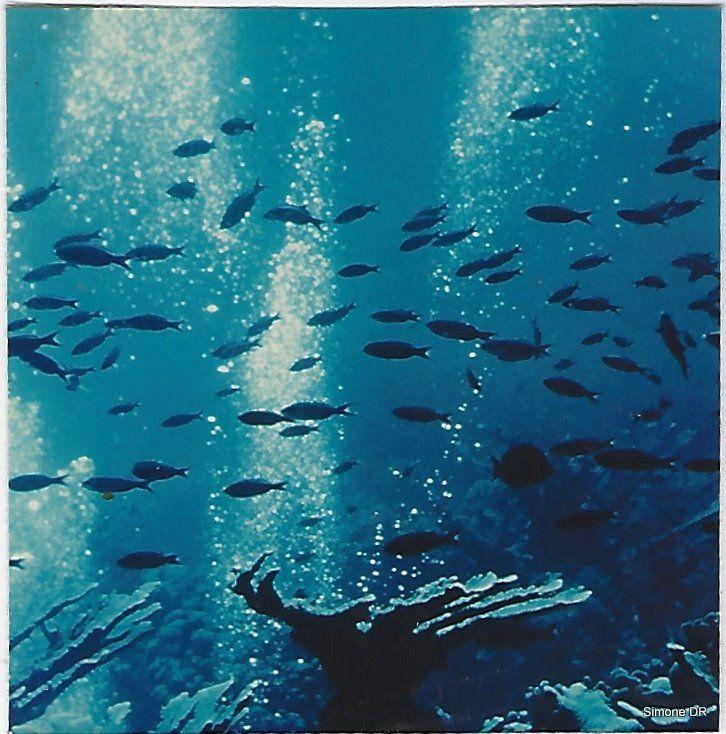 Balade sous-marine