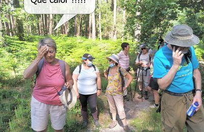 Rando douce 2021/11 :  A l'ombre des pins de Saint-Aubin