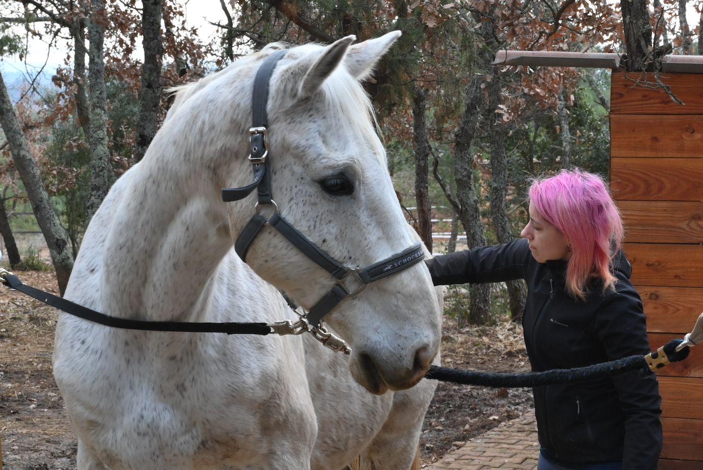 Photos AC 1 - Philippe et Florence 2 et 3 - On bichonne les chevaux