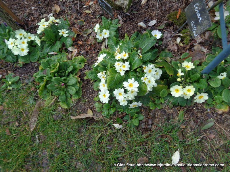 Mon jardin Le Clos fleuri en mars .....