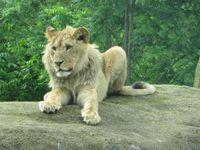 Sahel Soudan: Lions, Oryx, Girafes, Addax, Koudous, babouins