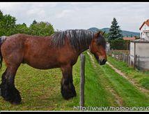 Le cheval qui a mis ses bottes de neige ...