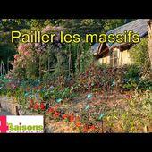 Pailler les massifs de vivaces, en vidéo