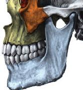 Le fonctionnement normal de la mâchoire (articulation temporomandibulaire-ATM)