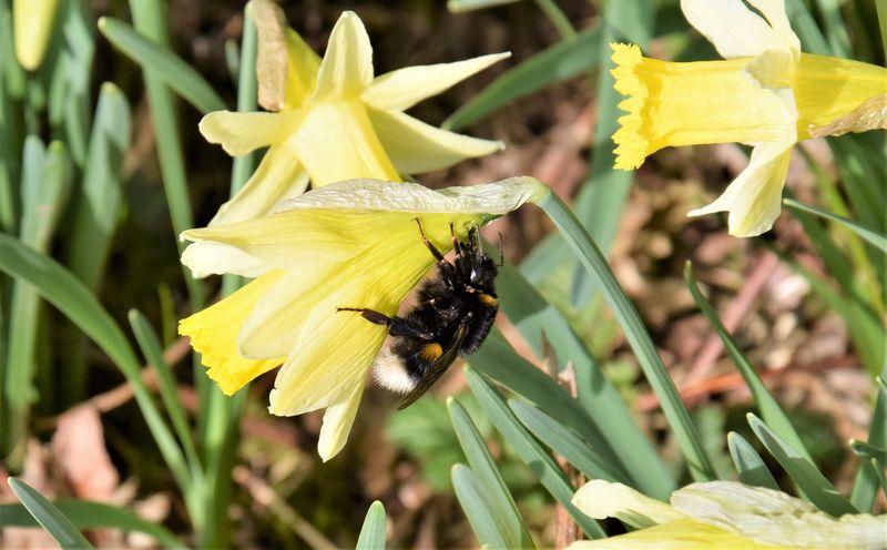 Enfin des fleurs, des abeilles et des bourdons