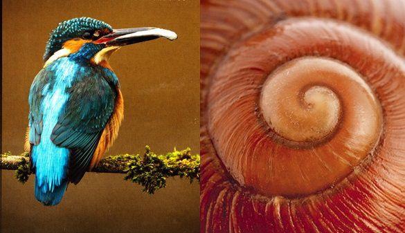 L'escargot et le martin-pêcheur