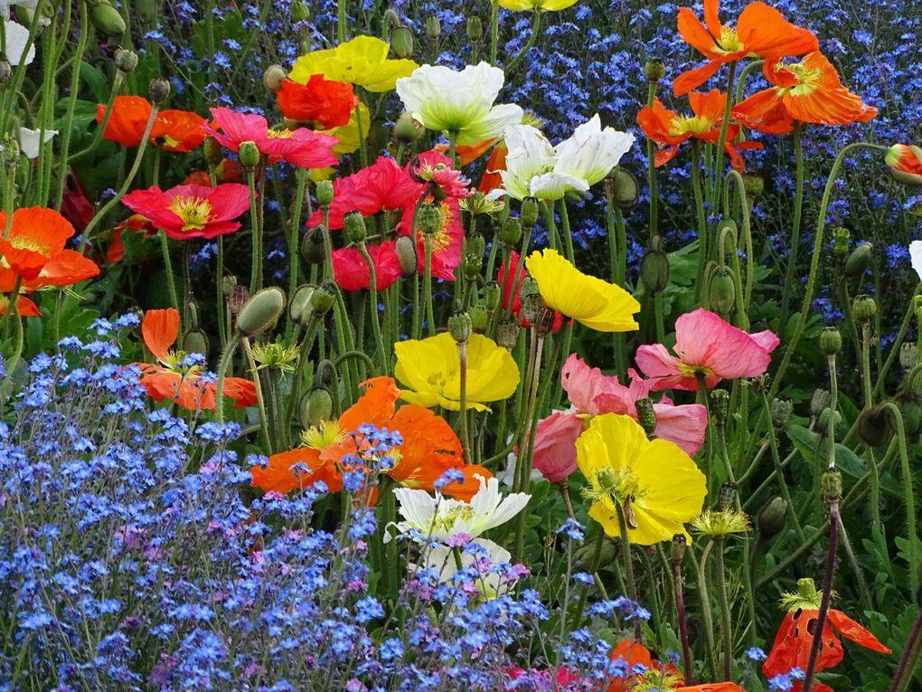 Les 50 ans du Parc Floral de Paris